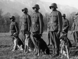 Army Dogs Photographic Print