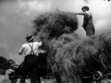 Haymaking Photographic Print by Chaloner Woods