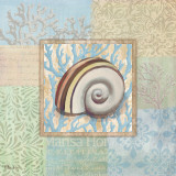 Oceanic Shell Collage IV Prints by Paul Brent