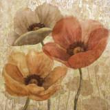 Poppy Allure II Poster by Conrad Knutsen
