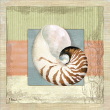 Montego Nautilus Print by Paul Brent