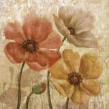 Poppy Allure I Posters by Conrad Knutsen