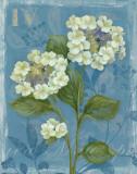 Lace Hydrangea Affiches par Pamela Gladding