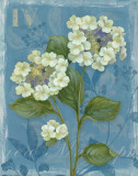 Lace Hydrangea Posters by Pamela Gladding
