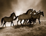 Wild Horses Poster van Lisa Dearing