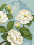 Camellias Prints by Pamela Gladding