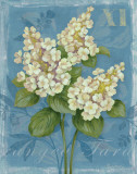 Tardiva Hydrangea Prints by Pamela Gladding