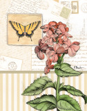 Botanical Collage I Prints by Paul Brent
