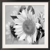 Sunny Sunflower II Prints by Nicole Katano