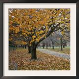Autumn Afternoon III Prints by Nicole Katano