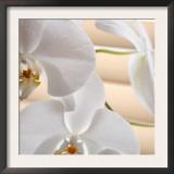 White Orchids I Prints by Nicole Katano