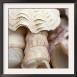 Shells I Posters by Nicole Katano
