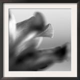 Petal Closeup III Prints by Nicole Katano