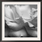 Rose Petals II Print by Nicole Katano