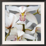 Orchid Closeup I Posters by Nicole Katano