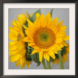 Sunny Sunflower III Prints by Nicole Katano