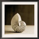 Sea Shells III Posters