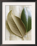 Magnolia Leaves I Posters