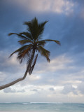 Bavaro Beach Palms at Dawn, Bavaro, Punta Cana Region, Dominican Republic Photographic Print by Walter Bibikow