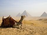 Lone Camel Gazes Across the Giza Plateau Outside Cairo, Egypt Fotografisk tryk af Dave Bartruff