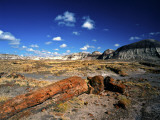 Long Petrified Log at Blue Mesa, Petrified Forest National Park, Arizona, USA Photographic Print by Bernard Friel