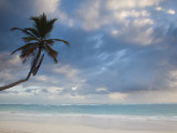 Bavaro Beach Palms at Dawn, Bavaro, Punta Cana Region, Dominican Republic Photographic Print by Walter Bibikow