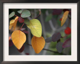 Fall Leaf Bouquet Posters by Nicole Katano