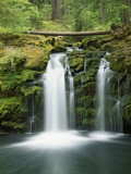 View of Whitehorse Falls, Umpqua National Forest, Oregon, USA Photographic Print by Dennis Flaherty