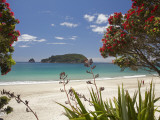 Pohutukawa Tree in Bloom and Hahei, Coromandel Peninsula, North Island, New Zealand Photographic Print by David Wall