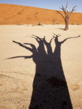 Dead Tree Casts Shadow on Dry Lakebed, , Sossusvlei, Namibia, Africa Photographic Print by Wendy Kaveney