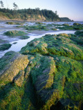 Seaweed on Rocks During Low Tide Near Cape Alava, Olympic National Park, Washington, USA Photographic Print by Scott T. Smith