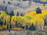 Gunnison National Forest, Colorado, USA Photographic Print by Jamie &amp; Judy Wild