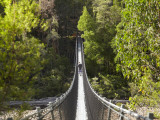 Person on Huon Swinging Bridge Over Huon River, Tahune Forest Reserve, Tasmania, Australia Photographie par David Wall