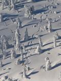 Skiing Through the Snowghosts at Whitefish Mountain Resort, Montana, USA Fotografisk trykk av Chuck Haney
