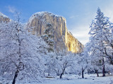 Sunrise Light Hits El Capitan Through Snowy Trees in Yosemite National Park, California, USA Photographie par Chuck Haney