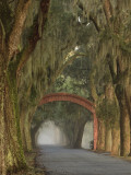 Entrance To Bethesda in Early Morning Light, Savannah, Georgia, USA Photographic Print by Joanne Wells