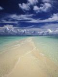 Beach in Palau Photographic Print by Nik Wheeler