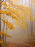 Fog and Autumn Foliage, Great Smoky Mountains National Park, North Carolina, USA Photographic Print by Joanne Wells
