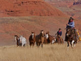 Cowboys Herding Horses in the Big Horn Mountains, Shell, Wyoming, USA Fotografie-Druck von Joe Restuccia III