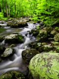 Creek Flows Through Forest, Shenandoah National Park, Virginia, USA Photographic Print by Jay O'brien