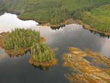 Aerial View of Forested Coastline, Ketchikan, Alaska, USA Photographic Print by Savanah Stewart