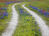 Tracks Leading Through a Wildflower Field, Texas, USA Photographic Print by Julie Eggers