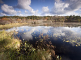 Cape Cod Wetlands, Massachusetts, USA Photographic Print by William Sutton