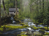 Watermill By Stream in Forest, Roaring Fork, Great Smoky Mountains National Park, Tennessee, USA Photographic Print by Adam Jones