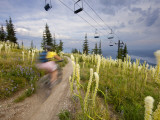 Mountain Biker Through the Beargrass on the Summit Trail, Whitefish Mountain Resort, Montana, USA Photographic Print by Chuck Haney
