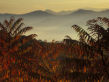 Sumac at Sunrise in the Mountains, Tennessee, USA Photographic Print by Joanne Wells