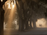 Boys Walking in Early Morning Fog at Bethesda, Savannah, Georgia, USA Photographic Print by Joanne Wells