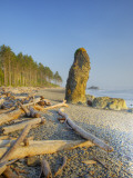 Shoreline and Seastacks, Ruby Beach, Olympic National Park, Washington, USA Photographic Print by Jamie & Judy Wild