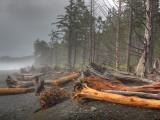 Beached Trees From Ocean Storms, Rialto Beach, Olympic National Park, Washington, USA Photographie par Jamie & Judy Wild