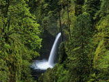 Metlako Falls Along Eagle Creek in the Mount Hood National Forest, Oregon, USA Photographic Print by Chuck Haney